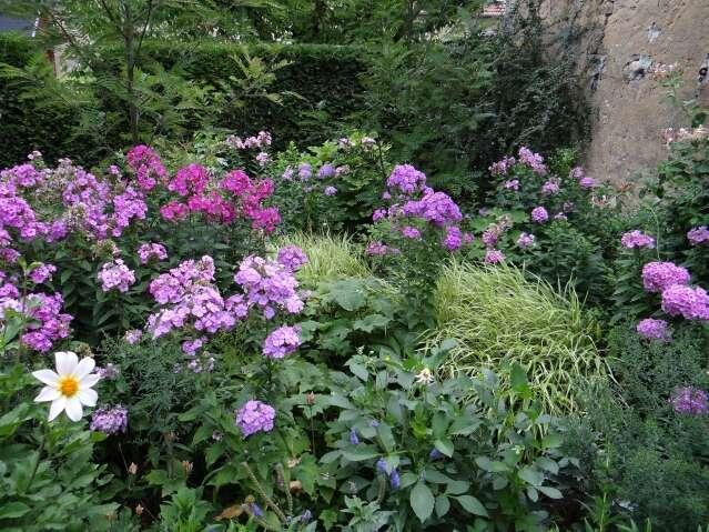 conseil entretien et plantation plantes et fleurs vivaces p pini re lepage. Black Bedroom Furniture Sets. Home Design Ideas