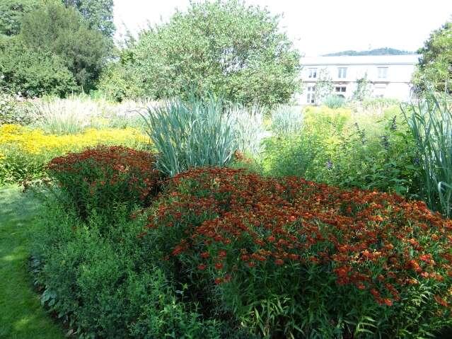 Conseil entretien et plantation plantes et fleurs vivaces for Entretien plantes vivaces
