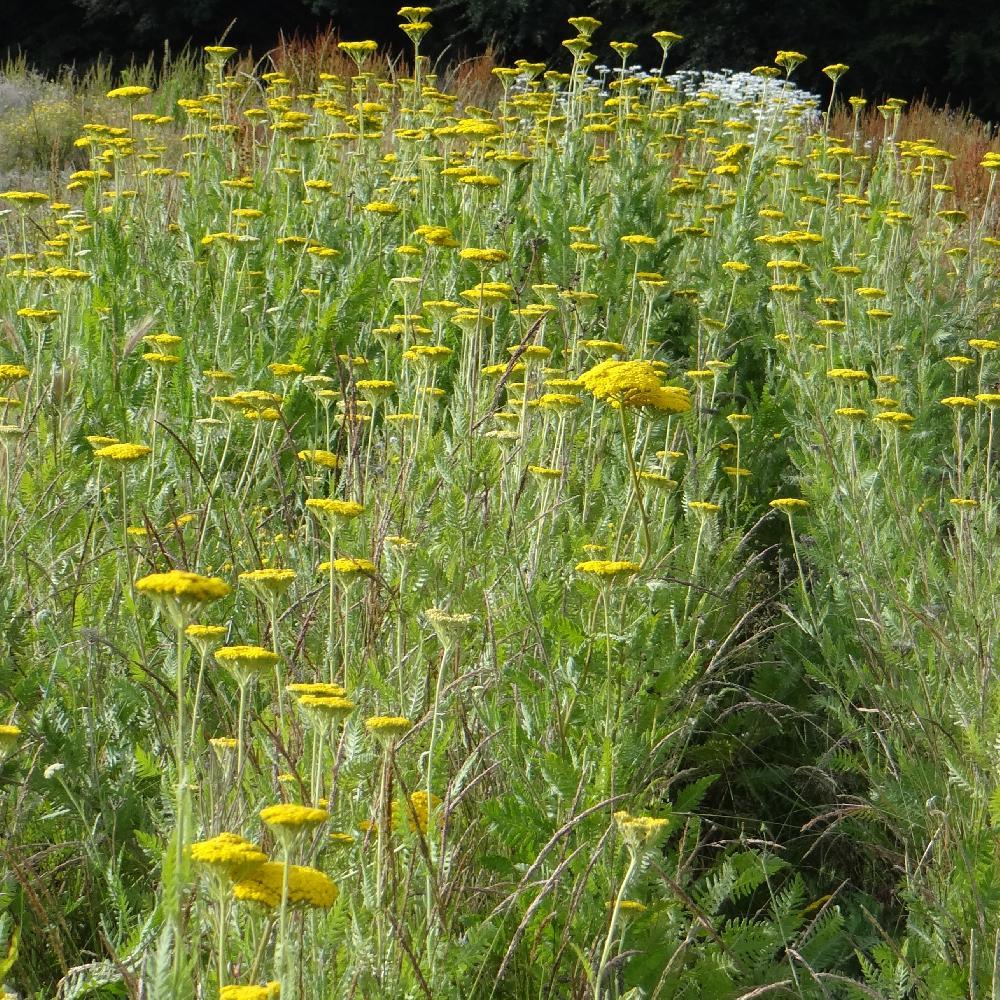 Plantes couvre sol vivaces plein soleil for Achat de plantes en ligne