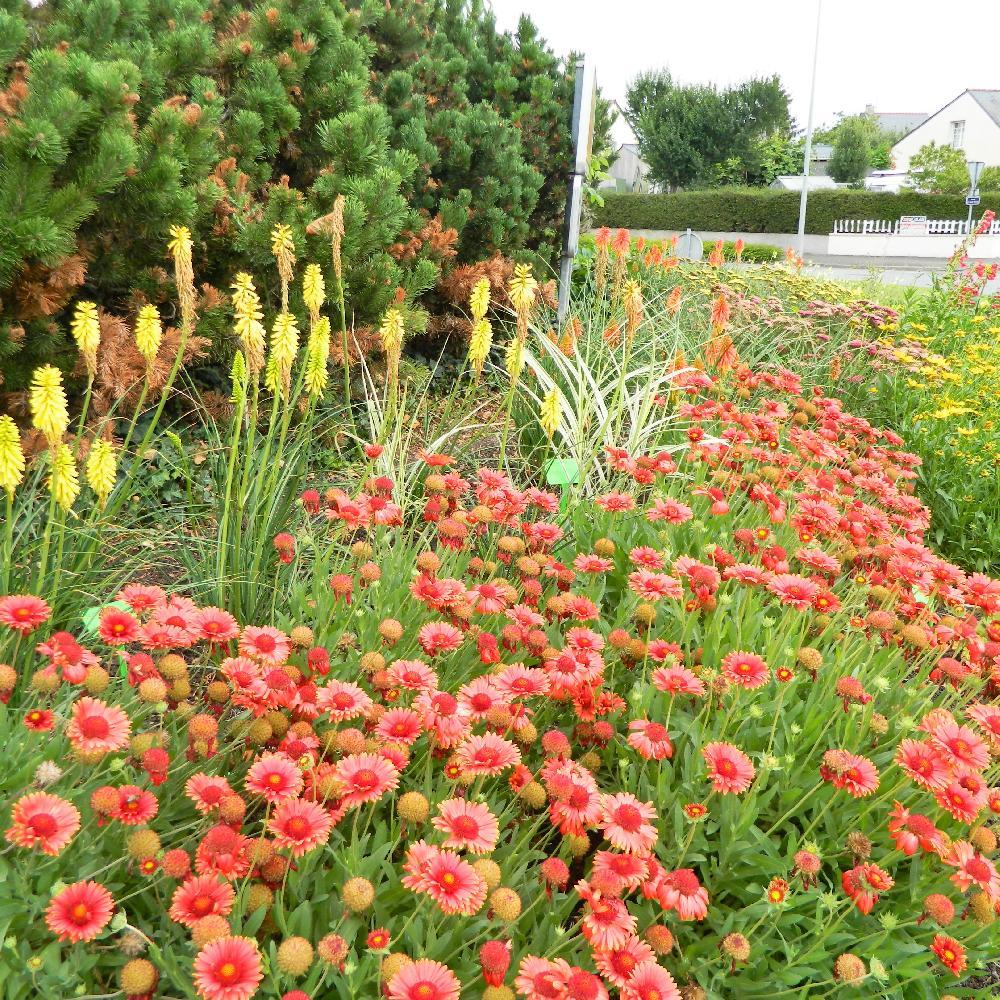 Achat plantes vivaces rabdosia longituba achat vente en for Vente de plantes