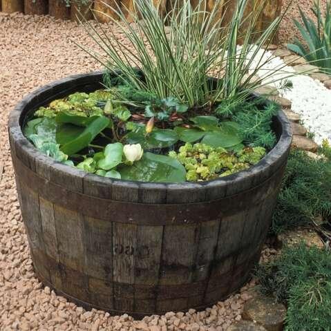 plantes aquatiques bassin exterieur. Black Bedroom Furniture Sets. Home Design Ideas