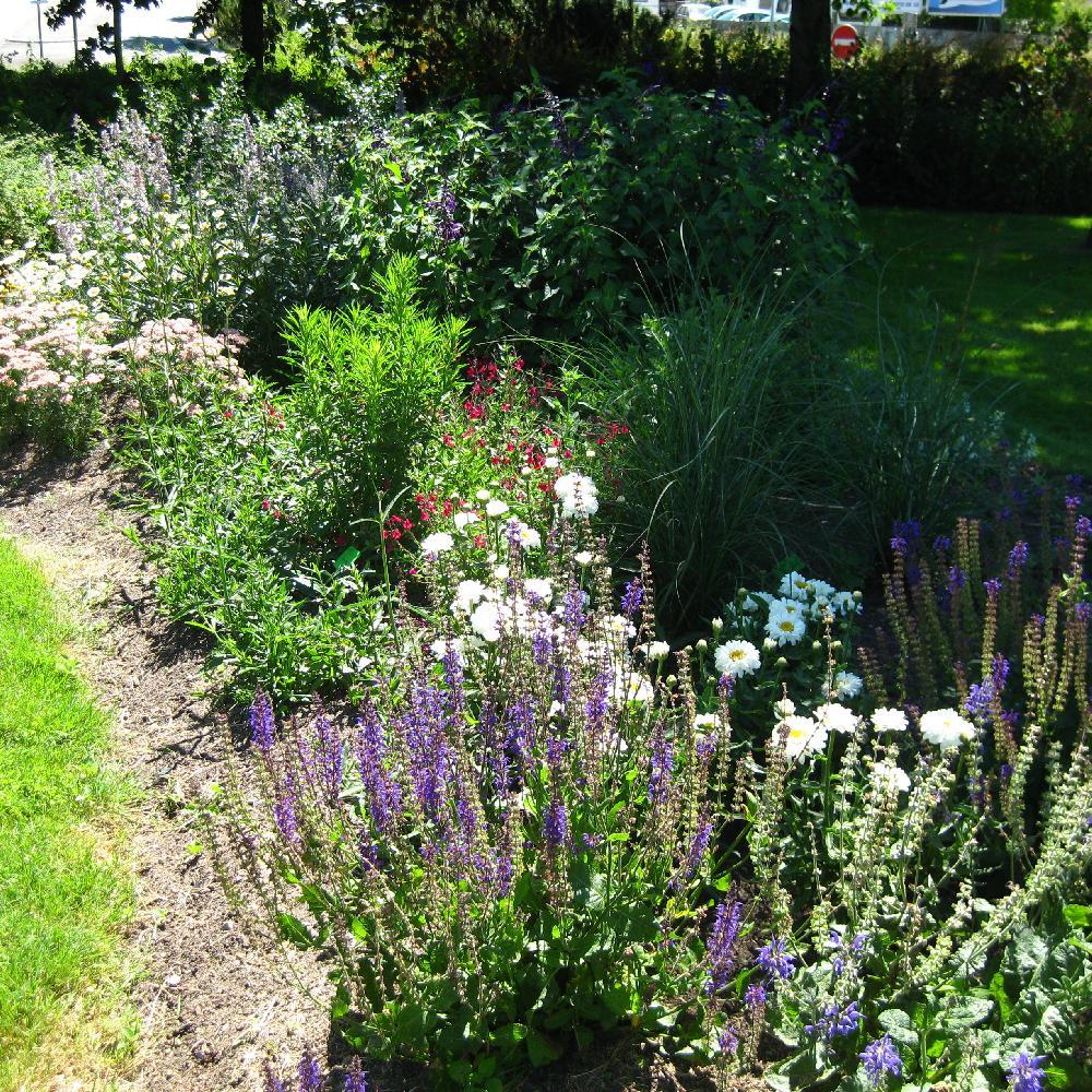 vente plantes vivaces gramin es et bulbes p pini re lepage. Black Bedroom Furniture Sets. Home Design Ideas